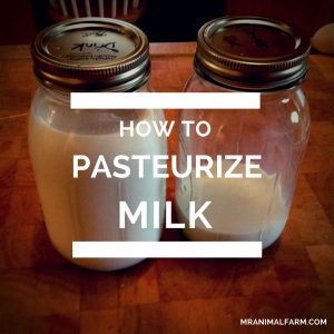 feature image for pasteurize milk. 2 quart jars with milk in them.