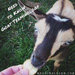 Goat Terminology