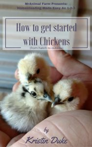 How to Get Started with Chickens (From Hatch to Outside)