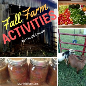 4 Fall Farm Activities