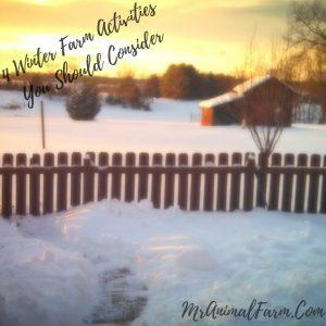 Winter Farm Activities