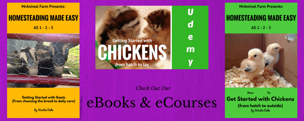 Homesteading eBooks & online courses