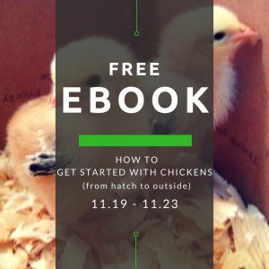 Raising Chickens eBook Free Promotion