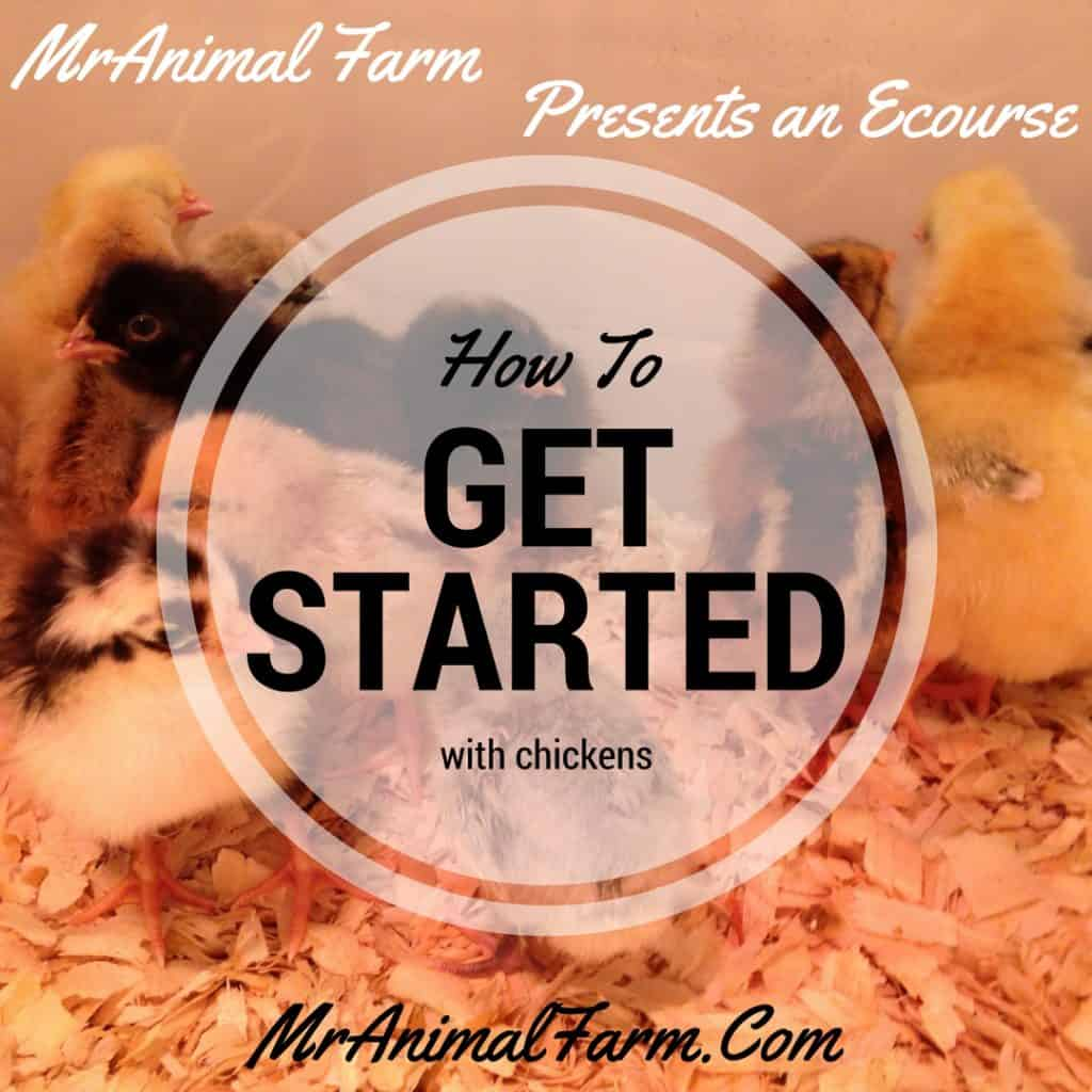 How To Get Started Raising Chickens Ecourse