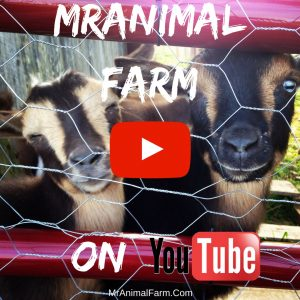MrAnimal Farm YouTube