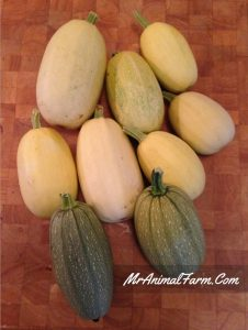 Winter Squash - 5 Types of Winter Squash You Should Grow