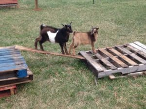goat toy pallet tower