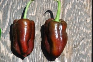 Types of Peppers - 5 Pepper Varieties You Should Try