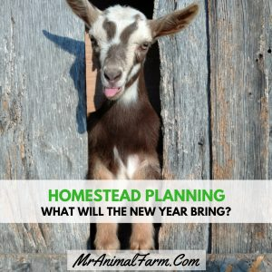 Homestead Planning - What Will the New Year Bring