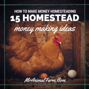 How to Make Money Homesteading - 15 Homestead Money Making Ideas