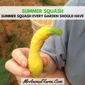 Types of Summer Squash Every Garden Should Have