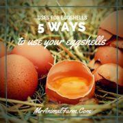 Uses for Eggshells