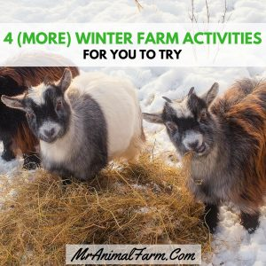 4 (more) Winter Farm Activities to Try