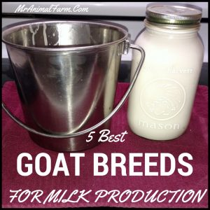 5 Best Goat Breeds for Milk Production