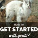 Raising Goats eCourse – The Basics (from choosing your goat through daily care)