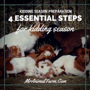 Kidding Season Preparation
