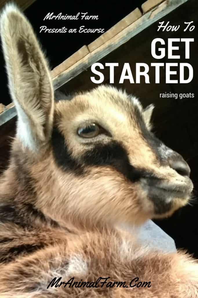 Raising Goats eCourse