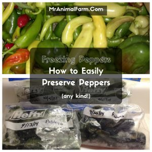 Freezing Peppers, how to easily preserve peppers