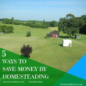 Save Money Homesteading