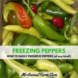 Freezing Peppers - How to Easily Preserve Peppers (any kind!)