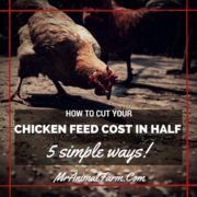 How to Cut Your Chicken Feed Cost in Half - 5 Simple Ways
