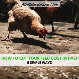 feature image for how to cut your feed costs in half