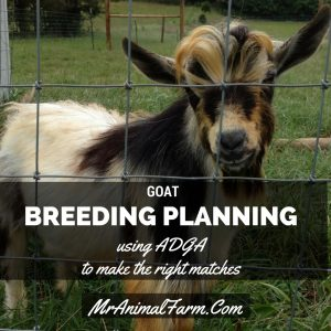 Goat Breeding Planning - Using ADGA to Make the Right Matches