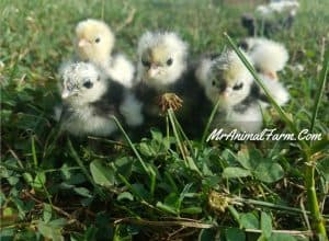 Spring Farm Activities