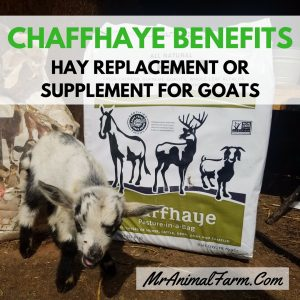 Chaffhaye benefits