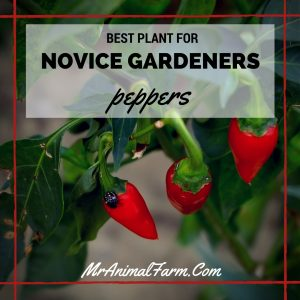 Best Plant for Novice Gardeners