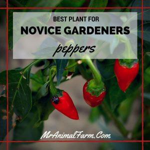 Best Plant for Novice Gardeners