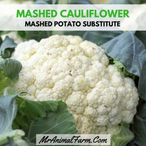 Mashed Potatoes Substitute - Mashed Cauliflower Instagram (new)