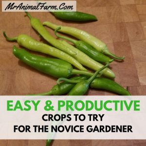 Easy and Productive Crops