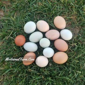 multi-colored eating eggs