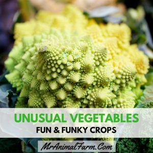 Unusual Vegetables – Fun & Funky Crops to Try Growing