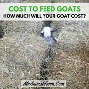Cost to Feed Goats