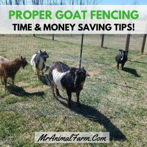 Proper Goat Fencing
