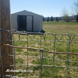 Proper Goat Fencing - Time & Money Saving Tips! - Mranimal Farm