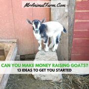 How much does a goat cost mranimal farm for How much does it cost to build a farmhouse