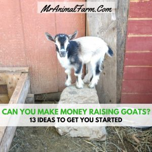 how to make money raising cattle Raising feeder steers written by:  raising beef cattle on a small homestead gives everyone in the family a lot of satisfaction, and you'll be happy knowing you.